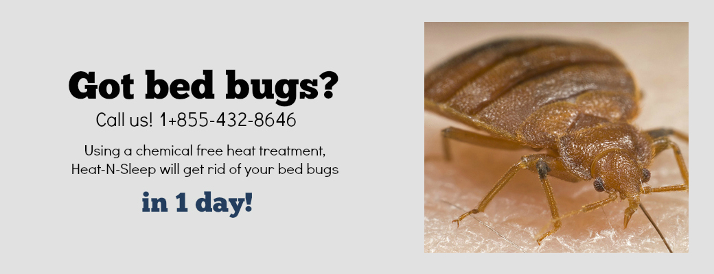 Bed bugs removal heat n sleep chemical free bed bug for Bedroom key dragon age origins