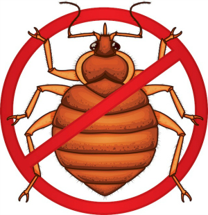 Chemical Free Bed Bug Treatment